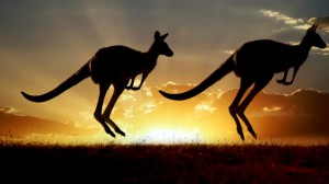 science-take-kangaroos-videoSixteenByNine1050